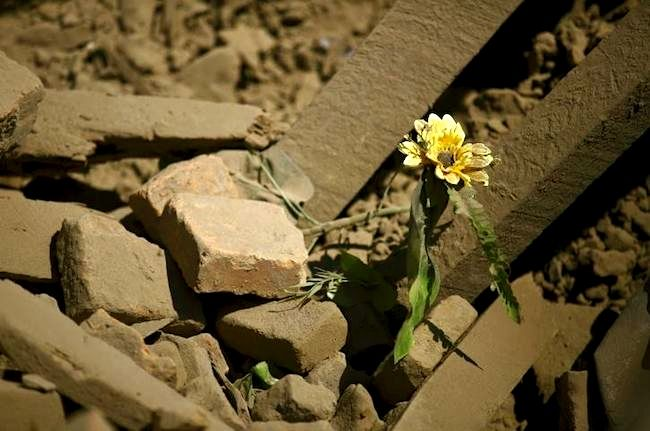 Against all odds, flower thrive just like the spirit of Nepalese people.